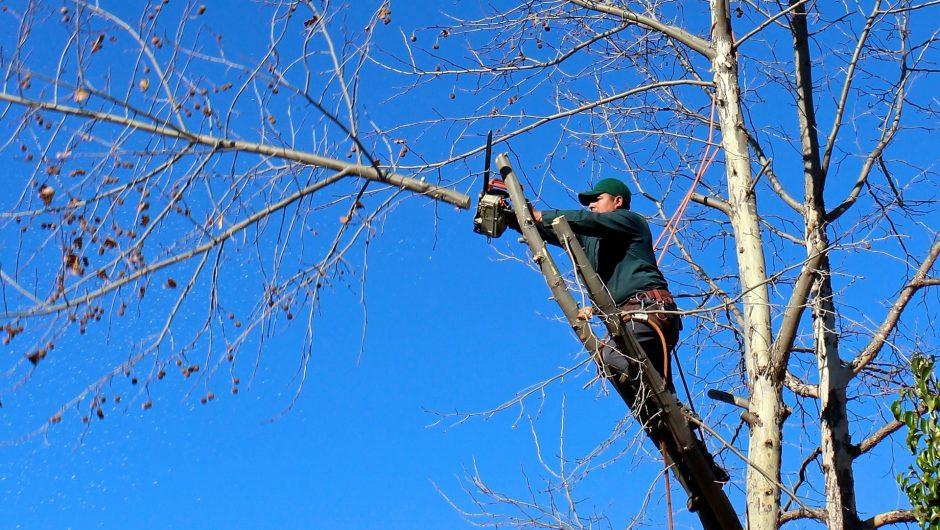 Quand élaguer vos arbres ?